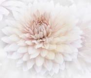 Blom- vattenfärgbakgrund Arkivbilder