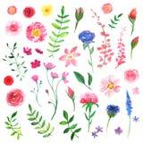 Blom- vattenfärgdesignbeståndsdelar