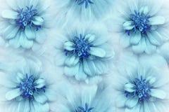 Blom- vattenfärgturkos-blått bakgrund Blommar tusenskönanärbild på en ljus turkosbakgrund Blommar sammansättning arkivfoto