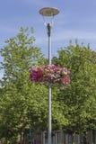 Blom- veckor Arkivfoto