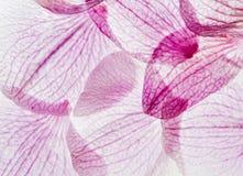 Blom- violett collagebakgrund Fotografering för Bildbyråer