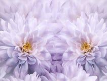 Blom- vit-lilor för vattenfärg bakgrund av krysantemumblommor closeupen blommar fjädern Blommacollage arkivbild