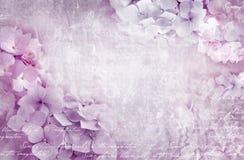 Blom- vykort för vanlig hortensia Användas som hälsningkort, inbjudan för att gifta sig, födelsedag och annan kan att hända för f royaltyfria foton