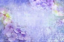 Blom- vykort för vanlig hortensia Användas som hälsningkort, inbjudan för att gifta sig, födelsedag och annan kan att hända för f arkivbild
