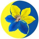 Blom- Yin Yang symbol royaltyfria foton