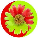 Blom- Yin Yang symbol arkivfoton