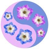 Blom- Yin Yang symbol Pelargon pelargonia royaltyfri foto