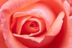blomcloseupen steg Arkivbild
