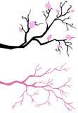 blomfilialtree Arkivfoton