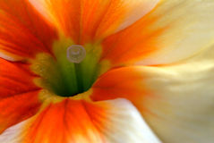 blomfjäder Arkivfoton