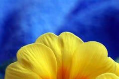 blomfjäder Royaltyfria Bilder