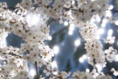 blomfjäder Royaltyfri Fotografi