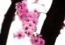blomfjäder Arkivfoto