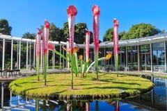 'Blomfodret ', kunglig botanisk trädgård, Sydney, Australien arkivbild