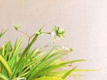 Bloming-Tage lizenzfreies stockfoto