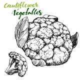 Blomkålgrönsakuppsättning Inristat detaljerat Drog skissar den realistiska vektorillustrationen för tappning handen royaltyfri illustrationer