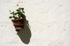 Blomkruka Fotografering för Bildbyråer