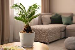 Blomkruka med den tropiska palmträdet arkivfoton