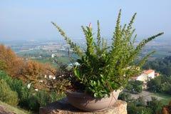 Blomkruka med en blomma på bakgrunden av dalen royaltyfria bilder