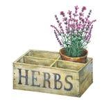 Blomkruka med lavendel i en gammal träspjällådaträdgård Royaltyfria Bilder