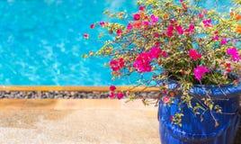 Blomkruka nära stor trevlig pöl i lyxigt hotell royaltyfri foto