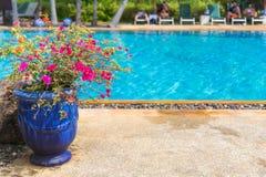 Blomkruka nära stor trevlig pöl i lyxigt hotell arkivfoto