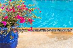 Blomkruka nära stor trevlig pöl i lyxigt hotell arkivfoton