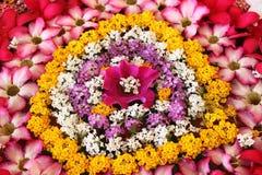 blomkruka på bakgrunden Arkivbilder