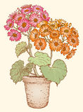 blomkruka på bakgrunden Arkivfoton