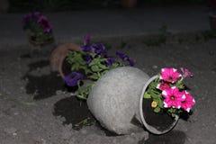 blomkruka på bakgrunden arkivbild
