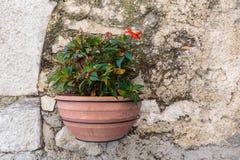 Blomkruka på en vägg royaltyfria bilder