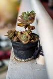 Blomkrukan framme av balcocy Royaltyfria Bilder