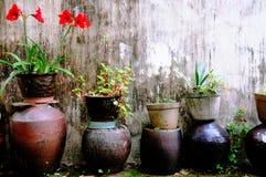 blomkrukar arbeta i trädgården växter royaltyfri foto