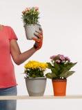 Blomkrukor arkivfoto