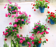 Blomkrukor med pelargon Arkivfoton