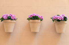 Blomkrukor med rosa blommor Arkivbild