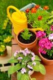 Blomkrukor och bevattnakruka i gräsplanträdgård Arkivfoto