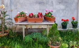 Blomkrukor på den gamla trätabellen i trädgården Arkivfoton