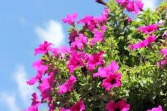 Blomkrukor på himmelbakgrund Royaltyfri Fotografi
