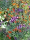 Blommaäng fotografering för bildbyråer