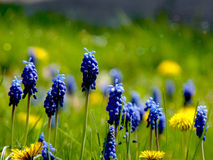 Blommaäng Arkivbilder