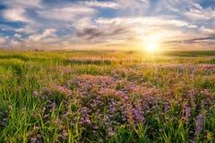 Blommaäng på soluppgång Royaltyfri Bild