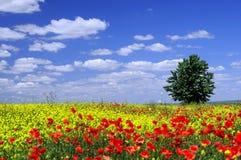 blommaängtree Arkivfoto