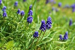 Blomma-äng arkivbild