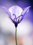 blomma 01 Royaltyfria Bilder