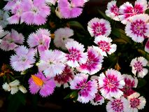 blomma 01 Royaltyfri Bild