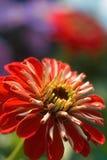 blomma 04 Arkivbilder
