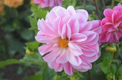 Blomma Arkivfoto