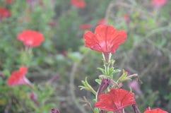 Blomma Royaltyfria Foton