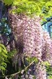 Blomma 011 Arkivfoton